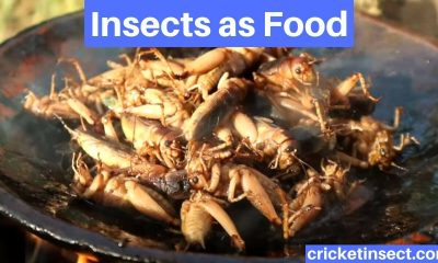 Entomophagy Insects as Food