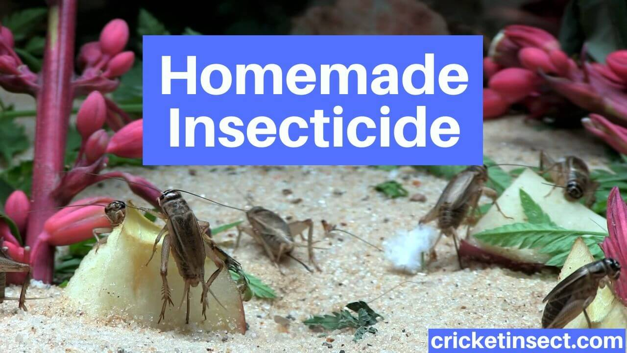 Homemade Insecticide to Get Rid of Crickets