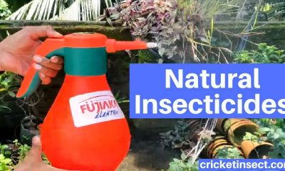 Natural Insecticides to Get Rid of Insects