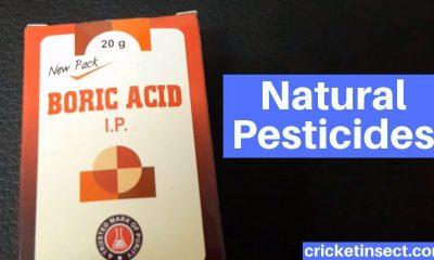 Natural Pesticides Crickets