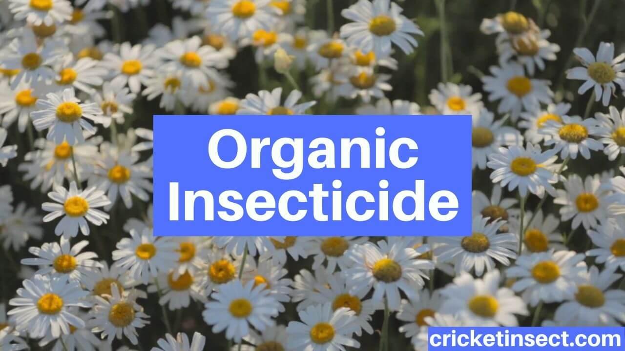 Organic Insecticide Organic Gardening
