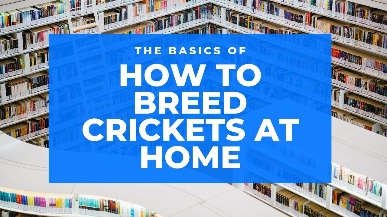 How to Breed Crickets at Home